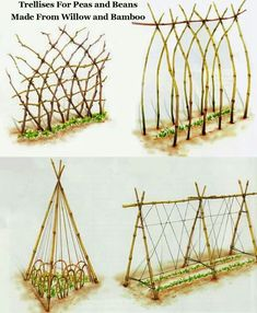 Trellis ideas for peas and beans via BackyardDiva