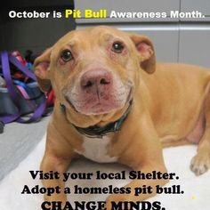 National Pit Bull Awareness Day.