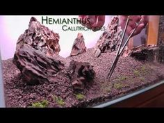 Aquascape Iwagumi Style - Part 2 - Planting and Filling [HD] - YouTube