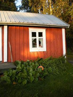 """ A little red cabin and a potato patch"", that's the Finnish dream / punainen mökki ja perunamaa"