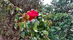 a magia das flores by Blanca Rosa Torreyra Blankita
