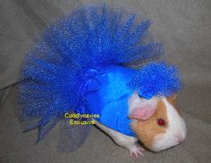 lots of different guinea pig costumes on this site Guinea Pig Costumes, Guinea Pig Clothes, Pet Clothes, Pugs In Costume, Pet Halloween Costumes, Pet Costumes, Animals And Pets, Baby Animals, Cute Animals
