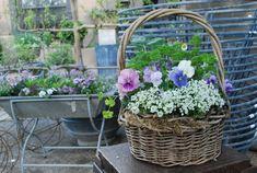 basket-of-pansies.jpg