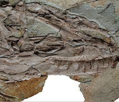 Giant feathered dinosaur Yutyrannus discovered in China Tyrannosaurus Rex Facts, Reptiles, Mammals, Feathered Dinosaurs, Dinosaur Skeleton, Dinosaur Claw, Prehistoric Creatures, Prehistoric Age, The Good Dinosaur