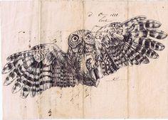 Mark Powell - owl - ballpoint pen drawing