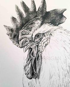 Rooster graphite pencil  drawing/ bird drawing www.kberriganart.com