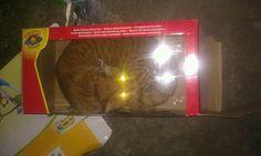 Cat in the box hahahaha