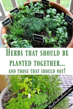 indoor gardening When it comes to having a herb garden, there's really nothing more satisfying than picking your very own fresh herbs for that night's dish! These herbs that grow toge Herb Pots, Garden Pots, Fruit Garden, Patio Herb Gardens, Plants For Garden, How To Garden, House Plants, Raised Herb Garden, Plants For Raised Beds