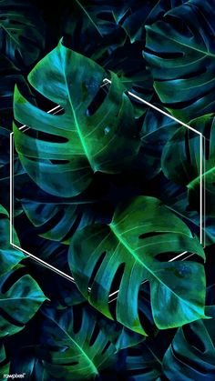 Need Money Wallpaper - I Love Money Cartoon - Money Goals List - Money Bank Box Tropical Background, Flower Background Wallpaper, Flower Phone Wallpaper, Framed Wallpaper, Neon Wallpaper, Scenery Wallpaper, Screen Wallpaper, Aesthetic Backgrounds, Aesthetic Iphone Wallpaper