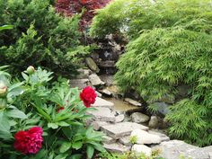 the creek in my garden, framed by Japanese maple and peony