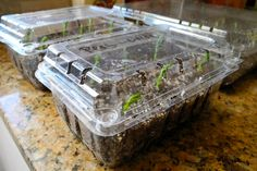 Cheap Mini Greenhouses for Seed Starting ~Family Food Garden