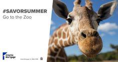 Summer to-do list! Summer Bucket Lists, Milwaukee, Giraffe, Animals, Felt Giraffe, Animales, Animaux, Giraffes, Animal