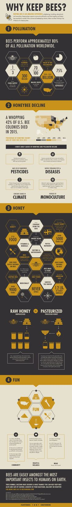 Beekeeping for Beginners: Why Keep Bees? They do MUCH more for us than you think!