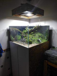 70 best aquariums images do crafts turtle aquarium 55 gallon