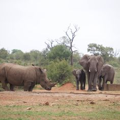 Elepants and Rhinos by Isabel Display Advertising, Print Advertising, Marketing And Advertising, Kruger National Park, National Parks, Herd Of Elephants, Photography Store, Retail Merchandising, Rhinos