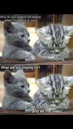 Special Pray silver lab temperament 37 Funny Animal Pictures You're Going To Love 35 Funny Animals Can't Stop Laughing Here Are 20 Animals That Think They're People. Funny Animal Memes Of The Day 27 Pics Grumpy Cat Smile Fu. Funny Animal Jokes, Funny Cat Memes, Funny Animal Videos, Cute Funny Animals, Haha Funny, Cute Baby Animals, Cat Jokes, Funny Cat Pics, Funny Cats And Dogs