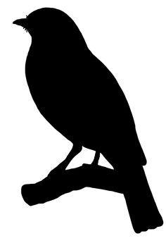 Resultado de imagem para birds silhouette