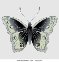 Vector Illustration of detailed Brightly colored butterfly. - stock vector