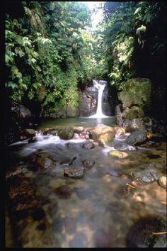 Les gorges de la falaise - Martinique