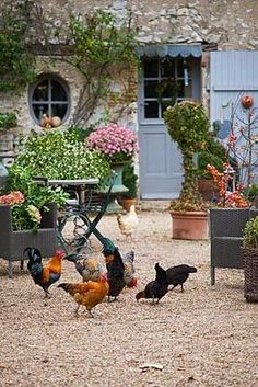 I love the free range chickens wandering in the garden courtyard of this French . - I love the free range chickens wandering in the garden courtyard of this French country house with - French Country House, French Farmhouse, Country Life, Country Style, French Cottage Garden, French Garden Ideas, Farmhouse Garden, Country Farmhouse, French Country Gardens