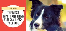 """When you read this article's title, what came to mind? Was it """"Don't bite people,"""" or perhaps """"Get along with other dogs,"""" or even """"Don't potty in the house?"""" True, those are all incredibly important things to teach any dog. But on a less dramatic note, for day-to-day living the most important thing you can teach your dog is how to ask politely for what he wants."""