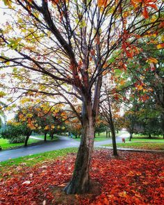 Otoño.. #asturias #places#lugares #autumn #otoño #tree #arbol #color #lgv30 @lgespana #colorful