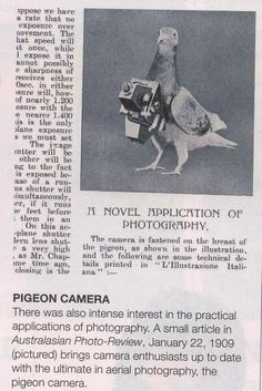 The Pigeon Camera - The Google Earth of The Early 1900s