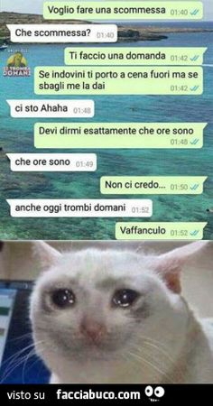 Vaccata Funny Video Memes, Funny Jokes, Funny Chat, Quality Memes, Sarcasm Humor, Haha, Funny Pictures, Kitty, Animals