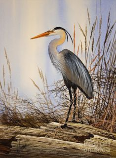 Wild Beauty Art Print by James Williamson. All prints are professionally printed, packaged, and shipped within 3 - 4 business days. Choose from multiple sizes and hundreds of frame and mat options. Wildlife Paintings, Wildlife Art, Watercolor Bird, Watercolor Paintings, Acrylic Paintings, China Painting, Watercolors, Chicken Art, Blue Heron