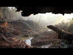 La région de Madre de Dios compte de nombreux mineurs et bûcherons illégaux, qui provoquent des dégâts environnementaux et humains sans que l'Etat ne réagisse de façon adaptée. Un problème que des activistes tentent de combattre en ligne. En 2011, les...