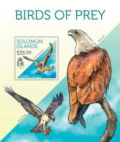 SLM 13709 bBirds of prey of Solomon Islands, (Haliaeetus leucogaster).