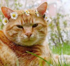 Miss Daisy's Kitty