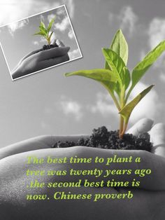 Trees The best time to plant a tree was twenty years ago. The second best time is now. Chinese proverb.