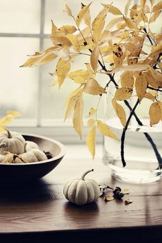 white pumpkins, easy seasonal >> stick + wax dipped poplar leaves