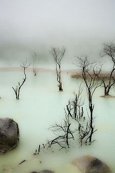 Mist and branches, swamp, deep