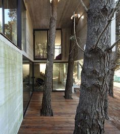 trees growning in arcitecture