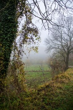 Mistige helling in het Vijlenerbos Zuid Limburg