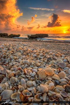 Warm golden sunrise from Coral Cove Park with some seashells on Jupiter Island. HDR image created using all three of my top HDR software.