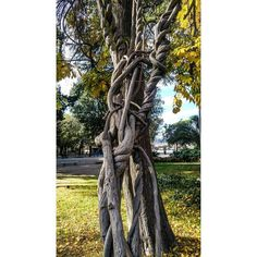 Check and follow my profile! Thanks!Marinai ubriachi... Drunk sailor men... -- #tree #trees #nature #naturelovers  #leeves #autumn #colours #ph #photo #photography #photograph #foto #fotografia #pic #pics #mobilephotography #mobile #picoftheday #bestoftheday #gramoftheday #instaoftheday #instagood #instago #roma #rome #picture #shoot #natura #shutterguild #instagram