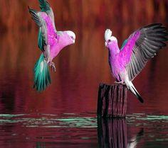 Nice parrots