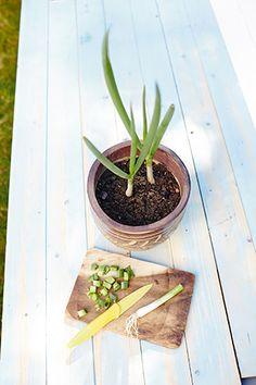 Zum Nachpflanzen: Ein Frühjahrsbeet Am Gartenzaun   Beets Jasmin In Blumentopf Zuchten Wichtige Tipps