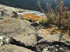 Fotografias de Natureza (Texturas) - Bait69Network