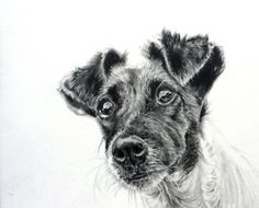 Kathryn Hansen is one of my favourite animal artists - Jack Russell Terrier original graphite drawing by kathrynhansenart, $55.00