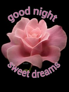 Good Night Flowers, Good Night All, Sweet Night, Good Night Sweet Dreams, Good Night Moon, Good Morning Love, Good Night Image, Good Night Quotes, Morning Quotes