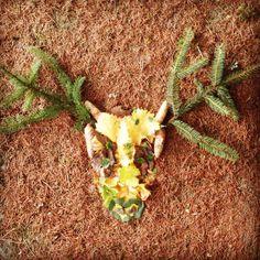 #Automne    #Cerf  #RetourALaMaison #Estfrance #flowleaf2015  11 Octobre 2015