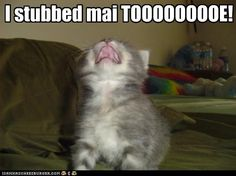 ITZ ONE DIRECTION! - LOLcats is the best place to find and submit funny cat memes and other silly cat materials to share with the world. We find the funny cats that make you LOL so that you don't have to. Cute Kitten Gif, Kittens Cutest, Cats And Kittens, Cats Bus, I Love Cats, Crazy Cats, Cool Cats, Silly Cats, Funny Cats