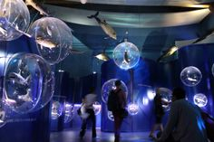 innovative museum exhibitions