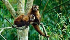 36 - Fauna del parque del Manu
