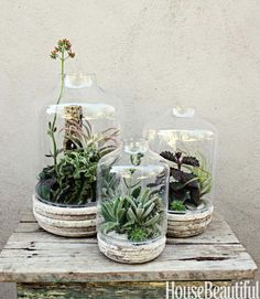 A terrarium is a good option if your mom isn't big on blooms or if you want something that will last longer. Customize the vessel shape and succulents used.