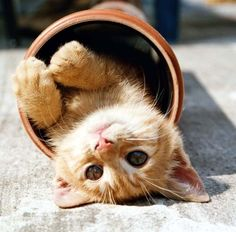 kitty in planting pot. too cute for me.
